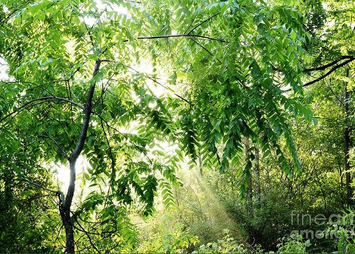 Juglans Nigra Greeting Card featuring the photograph Sun Rays Through Black Walnut Leaves by Thomas R Fletcher