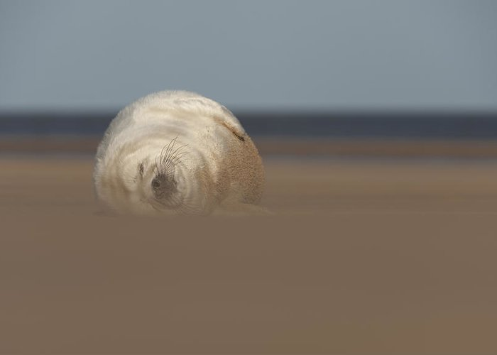 Cute Greeting Card featuring the photograph Sun Sea And Sand by Andy Astbury