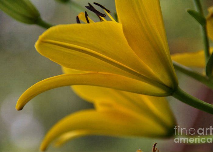 Yellow Greeting Card featuring the photograph Sundrenched by Tamera James