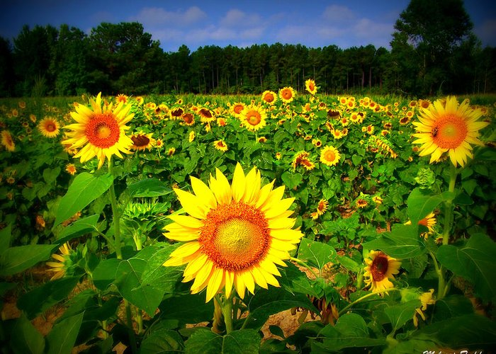 Sunflower Greeting Card featuring the photograph Sunflower Field by Melessia Todd