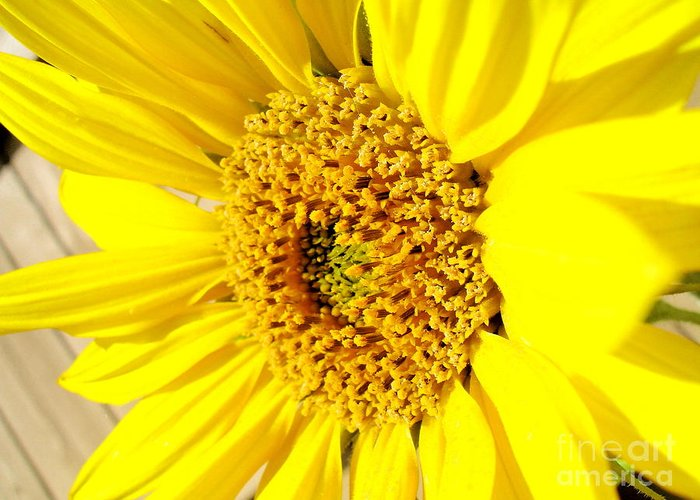 Sunflower Joy Greeting Card featuring the photograph Sunflower Joy by Laurisa Rabins