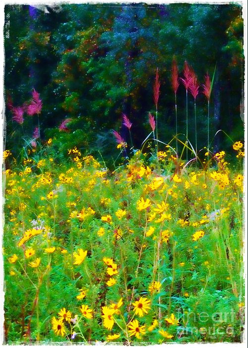 Sunflowers Greeting Card featuring the photograph Sunflowers And Grasses by Judi Bagwell