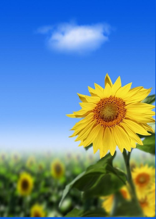 Sunflower Greeting Card featuring the photograph Sunflowers, Artwork by Victor Habbick Visions