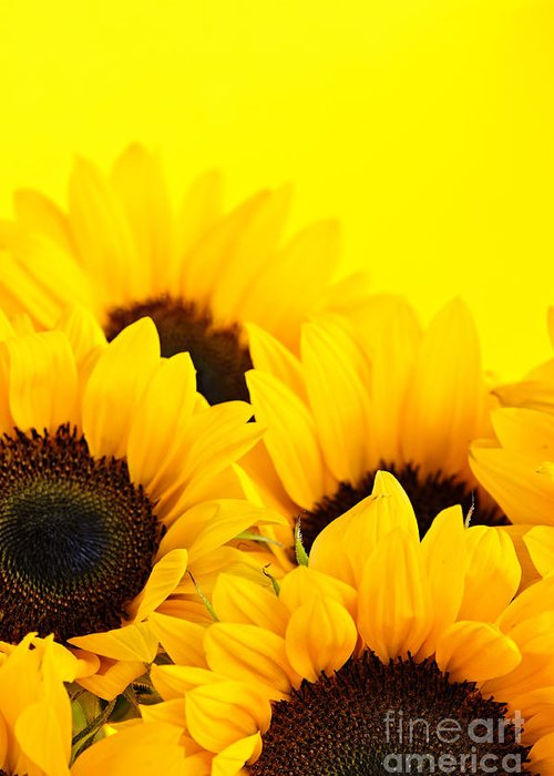 Sunflowers Greeting Card featuring the photograph Sunflowers by Elena Elisseeva