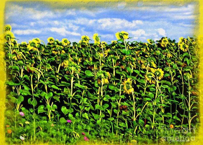 Sunflowers In France Greeting Card featuring the photograph Sunflowers In France by Joan Minchak