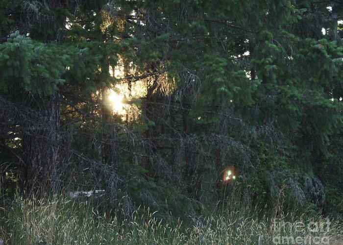 Greeting Card featuring the photograph Sunlight Orbs 3 by Jane Whyte