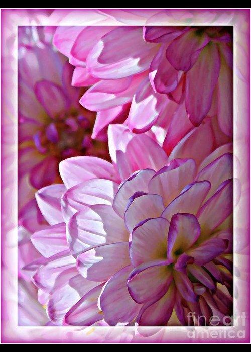 Pink Dahlias Greeting Card featuring the photograph Sunlight Through Pink Dahlias by Carol Groenen