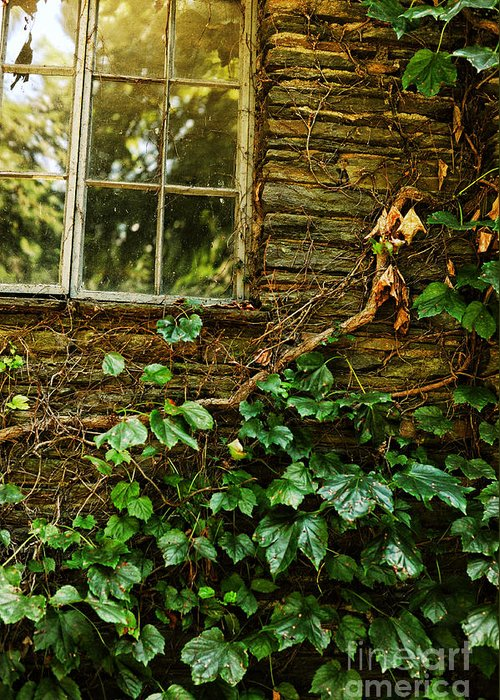 Grapevines Greeting Card featuring the photograph Sunlit Window And Grapevines by HD Connelly