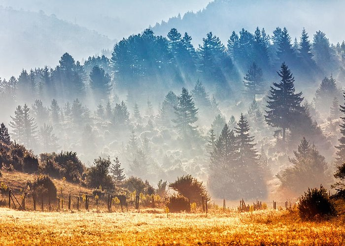 Bulgaria Greeting Card featuring the photograph Sunny Morning by Evgeni Dinev