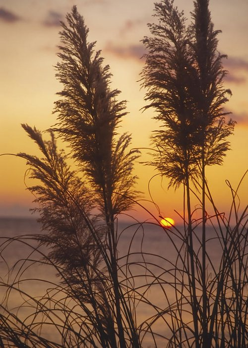 Evening Greeting Card featuring the photograph Sunset On The Mediterranean Sea And Plant by Patrick Kessler