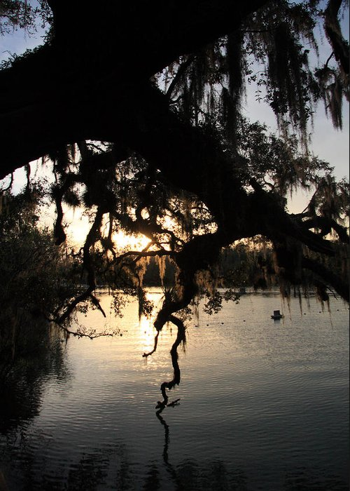 Sunset Greeting Card featuring the photograph Sunset At Blue Springs by Rick Lesquier