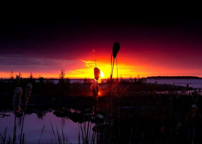 Cat Tail Greeting Card featuring the photograph Sunset Cat Tail by Cale Best
