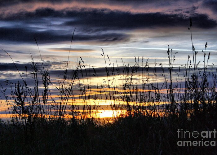 Sunset Greeting Card featuring the photograph Sunset Grasses by Sandra Cockayne