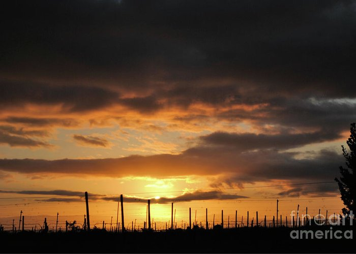 Vineyards Greeting Card featuring the photograph Sunset On The Vineyards by Nancy Chambers