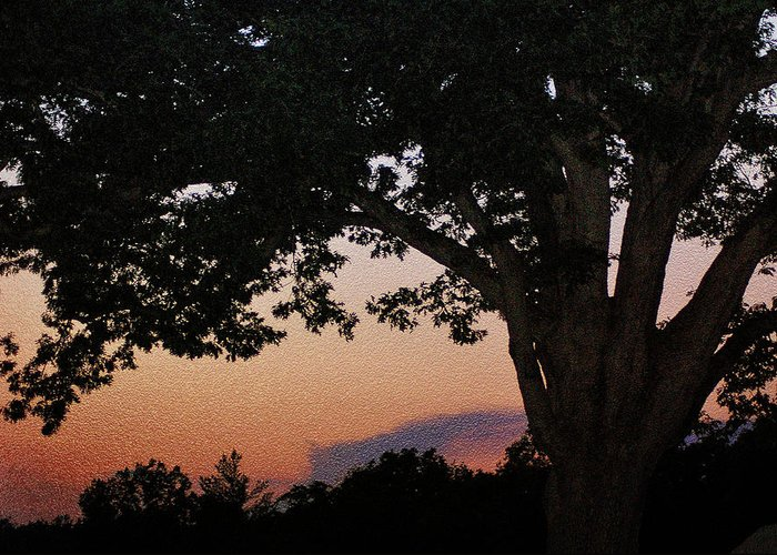Sunset Greeting Card featuring the photograph Sunset Over A Witness Tree by Dave Sandt