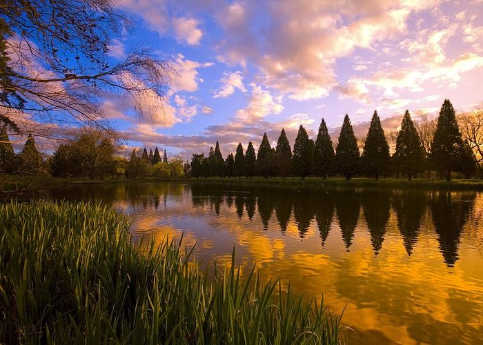 American Greeting Card featuring the photograph Sunset Reflection On A Pond, Portland by Craig Tuttle