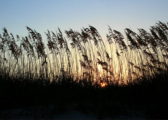 Beach Greeting Card featuring the photograph Sunset Sea Oats by Barbara Northrup