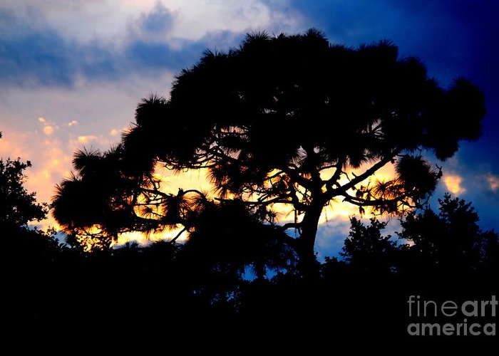 Pine Tree Greeting Card featuring the photograph Sunset With Pine Tree by Theresa Willingham