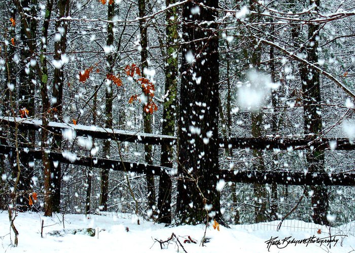 Landscape Greeting Card featuring the photograph Supersized Snowflakes by Ruth Bodycott