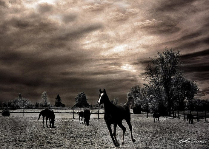 Beautiful Horse Fine Art Greeting Card featuring the photograph Surreal Horses Infrared Nature by Kathy Fornal