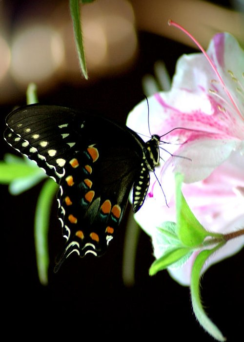 Swallowtail Greeting Card featuring the photograph Swallowtail by David Weeks