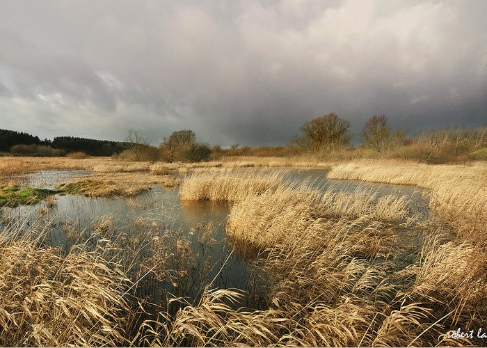 Swampland Greeting Card featuring the photograph Swampland by Robert Lacy
