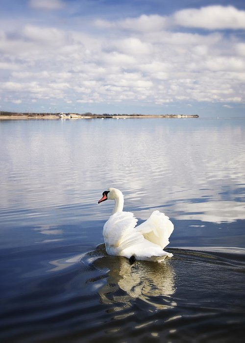 Swan Greeting Card featuring the photograph Swan Song by Vicki Jauron