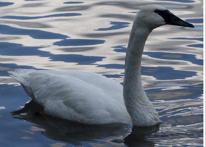 Bird Greeting Card featuring the digital art Swan Watching by Maxine Bochnia