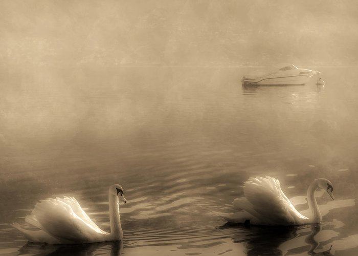 Lago Maggiore Greeting Card featuring the photograph Swans by Joana Kruse