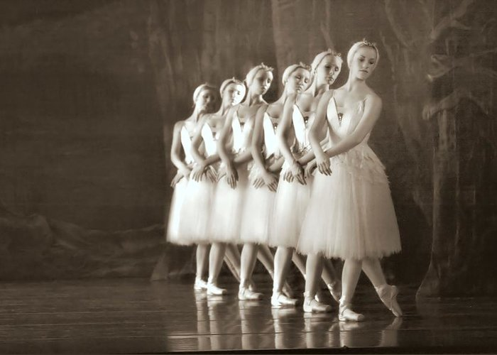 Ballet Greeting Card featuring the photograph Swans Lined Up by Kenneth Mucke