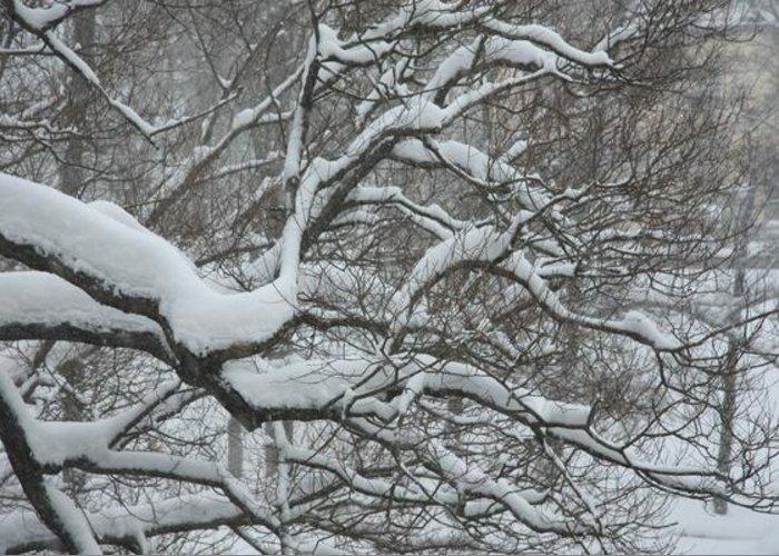 Djurgarden Greeting Card featuring the photograph Swedish Winter by Kyra Munk Matustik