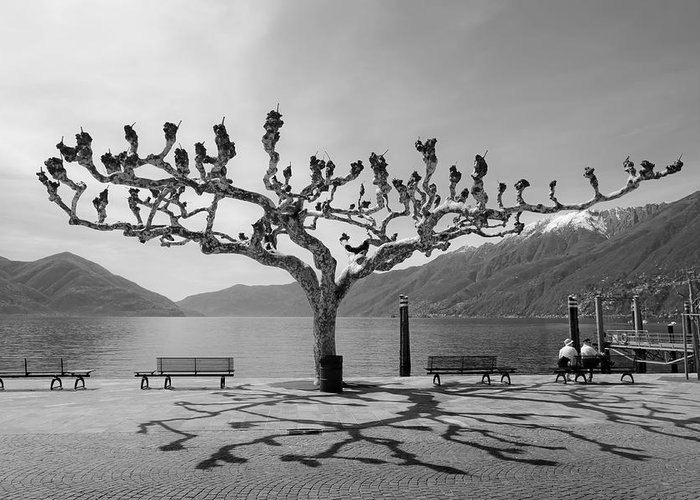 Travel Europe Greeting Card featuring the photograph sycamore trees in Ascona - Ticino by Joana Kruse