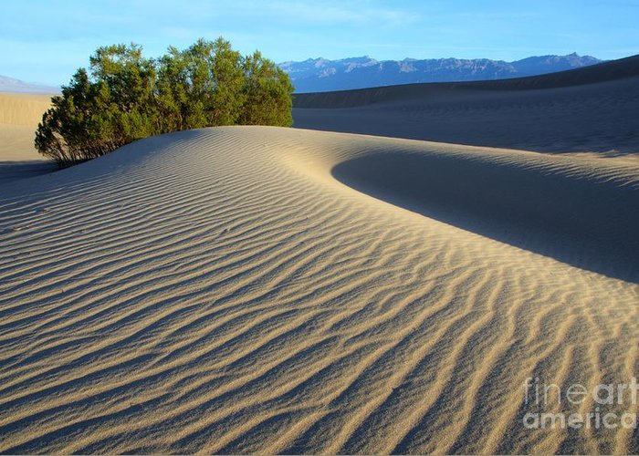 Death Valley Greeting Card featuring the photograph Symphony Of The Sand by Bob Christopher