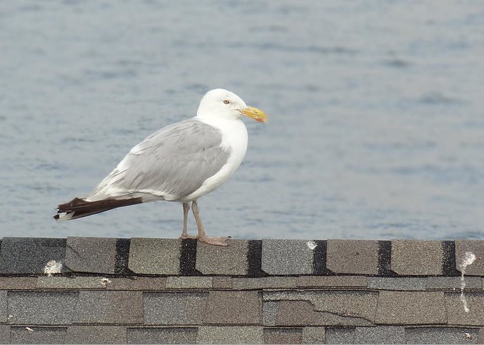 Seagull Greeting Card featuring the photograph Taking in the View by Jessica Cruz