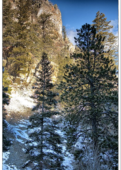 Mountain Greeting Card featuring the photograph Tall Trees by Lisa Spencer