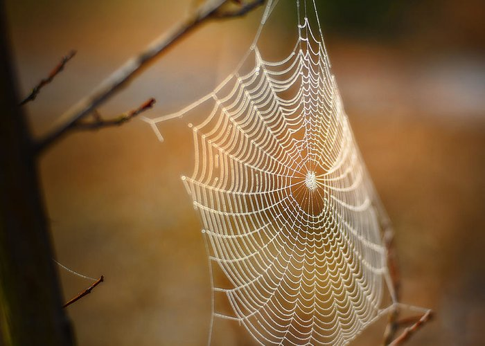 Spider Web Greeting Card featuring the photograph Tangled Web by Brenda Bryant
