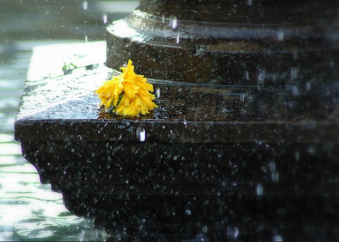 Flower Greeting Card featuring the photograph Tears On Cempasuchil by Fabio Lorenzano