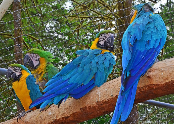 Macaws Greeting Card featuring the photograph Telling Stories by Jack Moskovita