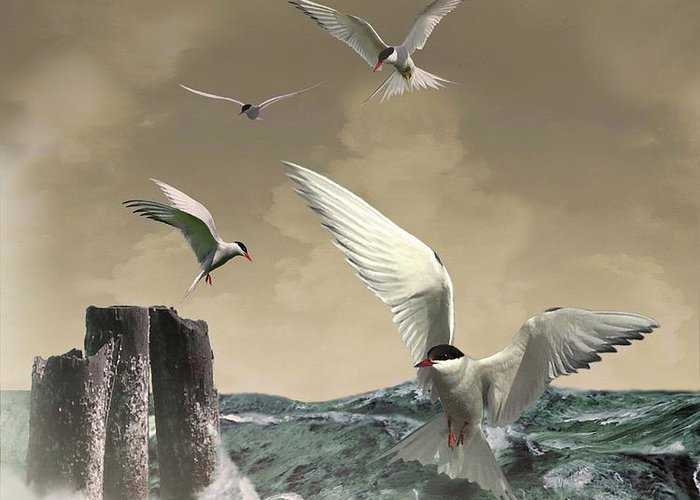 Seabirds Greeting Card featuring the painting Terns In The Wind by IM Spadecaller