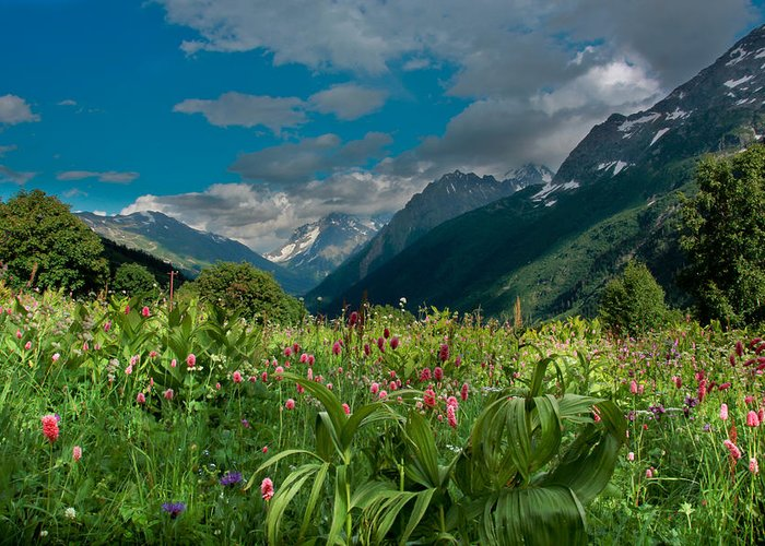 Landscape Greeting Card featuring the photograph The Alpine Meadows by Olga Vlasenko