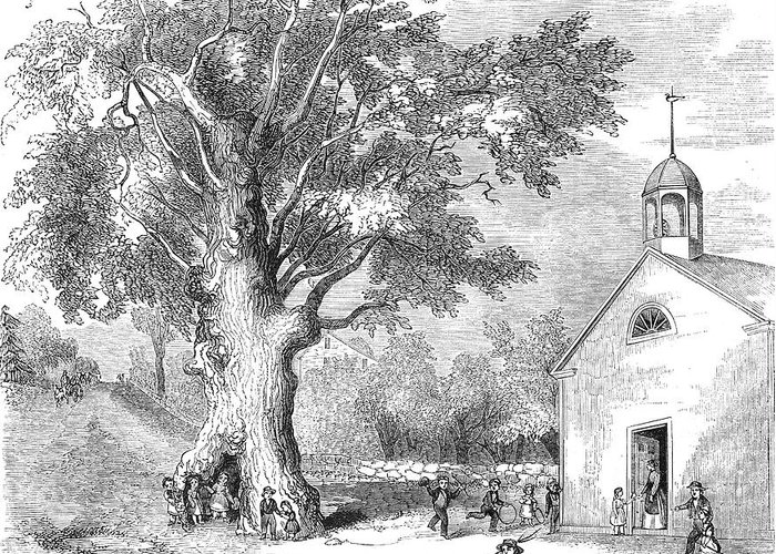 1853 Greeting Card featuring the photograph The Ancient Oak by Granger