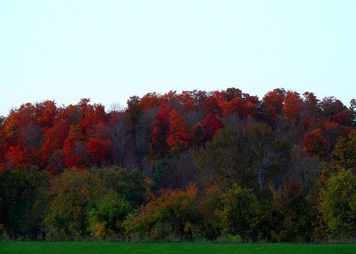 Autumn Theme Greeting Card featuring the photograph The Backyard by Cyryn Fyrcyd