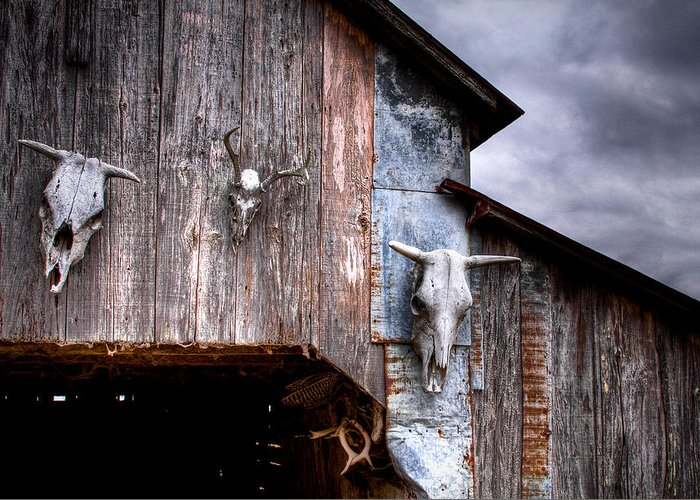 Cow Greeting Card featuring the photograph The Broad Side Of A... by Pixel Perfect by Michael Moore