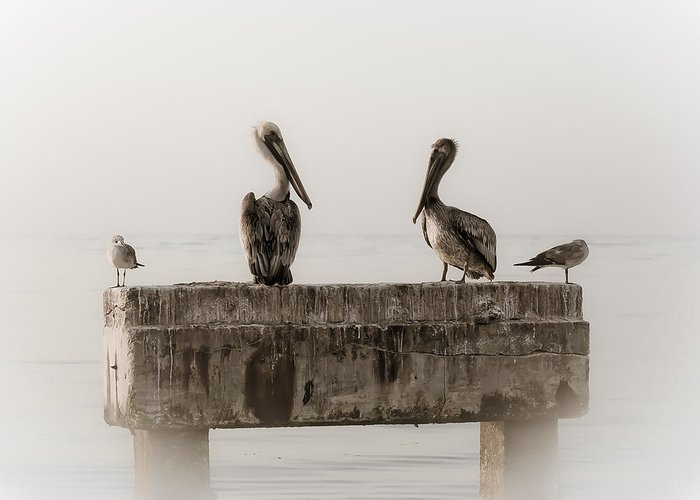 Pelicans Greeting Card featuring the photograph The Comedians by Scott Meyer