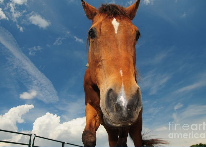 The Curious Horse Greeting Card featuring the photograph The Curious Horse by Paul Ward