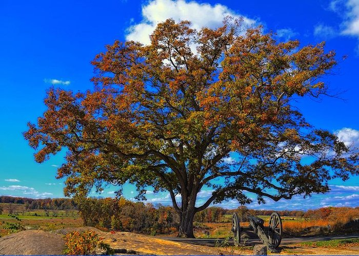 Devils Den Greeting Card featuring the photograph The Devils Den Witness Tree. by Dave Sandt