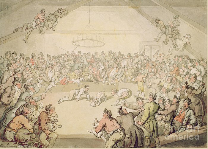 Arena; Gambling Greeting Card featuring the painting The Dog Fight by Thomas Rowlandson