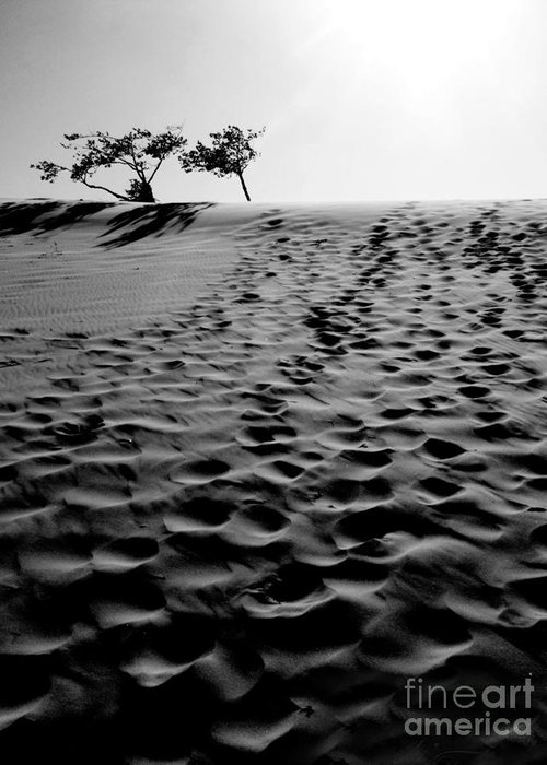Oregon Greeting Card featuring the photograph The Dunes At Dusk by Tara Turner