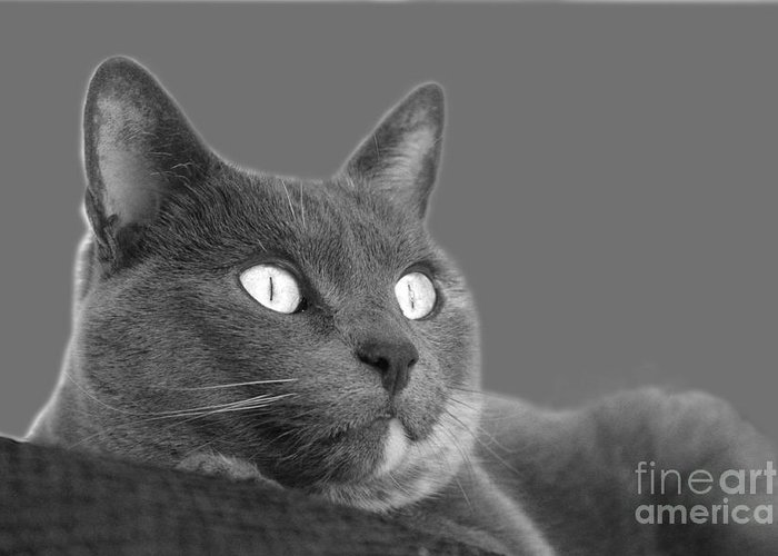 Cat Greeting Card featuring the photograph The Eyes Have It by Nareeta Martin
