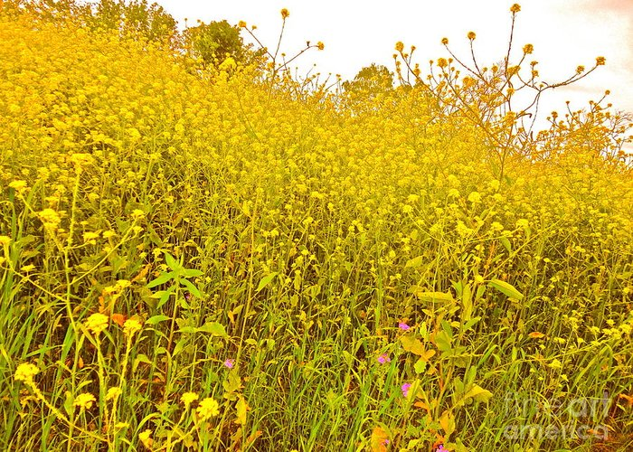 Wild Flowers Greeting Card featuring the photograph The Flowers Wait For Us by Chuck Taylor